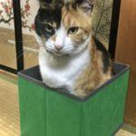 ドル円「箱の中に入りたい」⬅猫かよ。